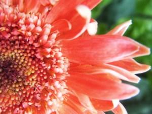 Daisy center blog