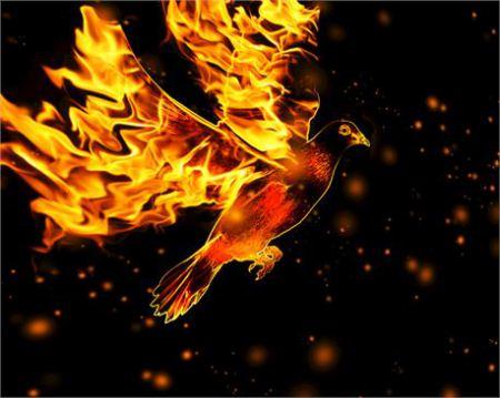 fire-dove